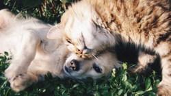 Rendez les données de contact de vos chiens et chats consultables
