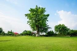 Abattage d'arbres, les règles à respecter