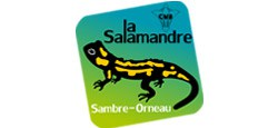 La nature sort de sa léthargie hivernale - balade avec la Salamandre